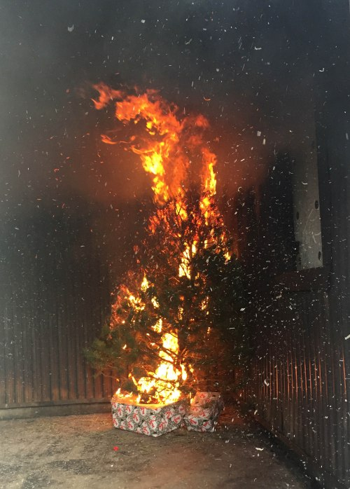 Fully engulfed tree